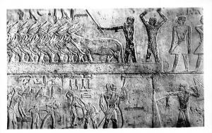 Egypt Sakkara Tomb of Ti, Agriculture Scenes