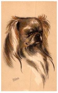 Dog , Pekingese ,   artist signed  R.F.Gaude