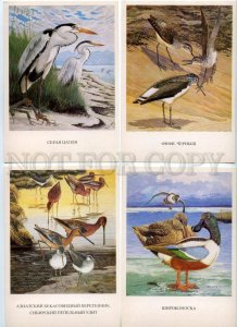 152478 Birds of Russia BAIKAL COMPLETE Set Old 16 Cards #2