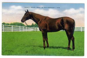 Twenty Grand Bred In Old Kentucky unused Kropp Linen Postcard; Horse