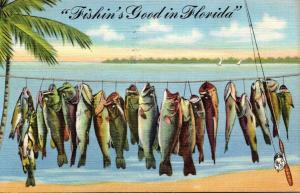 Florida Day's Catch Fishin' Is Good In Florida 1946 Curteich