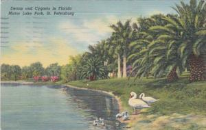 Florida St Petersburg Swans and Cygnets In Mirror Lake Park 1941 Curteich