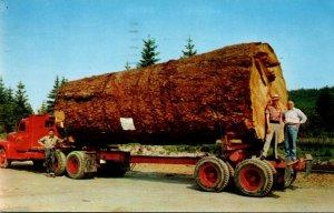Oregon Logging Giant Fir Log On Truck 1958