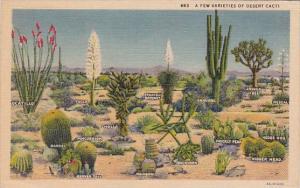 A Few Varieties Of Cacti 1950