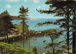 England Guernsey The Pine Forest