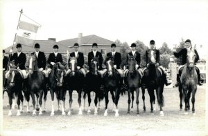 Hippique sport horses group horse riders dressage test 1971 RPPC 03.95