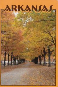 Tree Lined Street At Maplewood Cemetery Harrison Arkansas