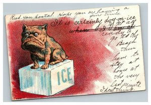 Vintage Early 1900's Postcard Divided Back Comic Dog on Ice