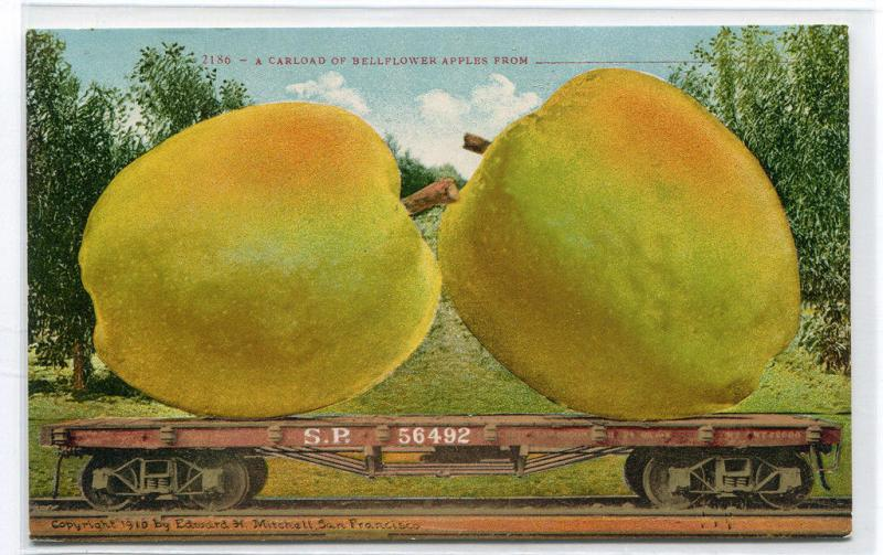 Exaggerated Bellflower Apples Exaggeration SP Railroad Car 1910c postcard