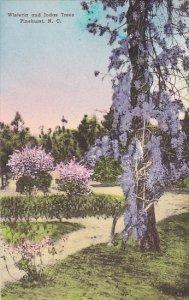 North Carolina Pinehurst Wisteria and a Judas Tree Handcolored Albertype