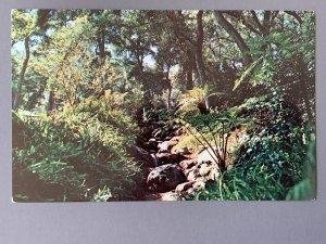 Descanso Gardens La Canada CA Chrome Postcard A1173090551