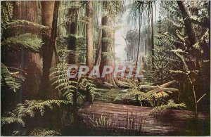 Modern Postcard Chicago Natural History Museum Formely Field Museum of Natura...