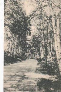 New Hampshire White Mountains Birch Road