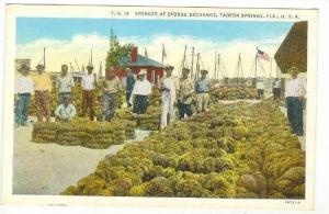 Sponges @ Sponge Exchange,Tarpon Springs,FL 1910-20s