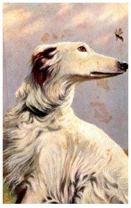 Dog , Russian Greyhound