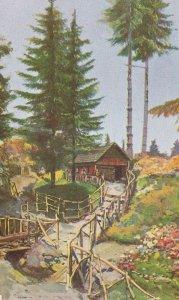 Bulgaria La Belle Pinete Di Vitocha Vintage Postcard