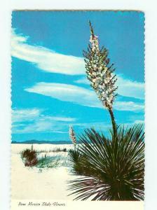Vintage Postcard White Sands National  Monument Park New Mexico  # 2684