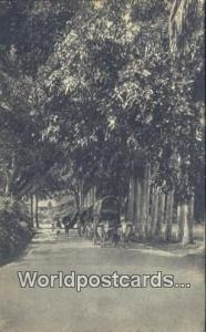Ceylon, Ceylan, Sri Lanka Kandy Peradeniya Road