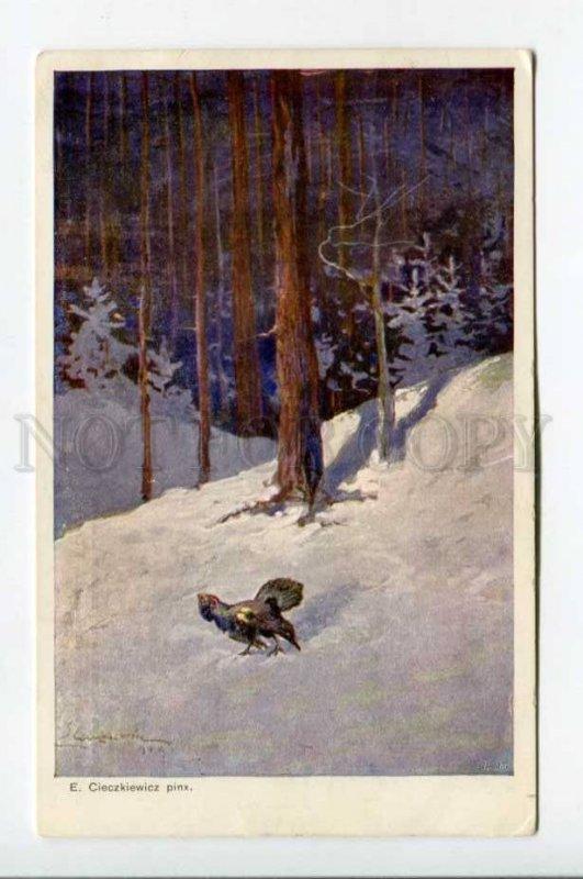 423085 POLAND Bird hunting blackcock capercaillie CIECZKIEWICZ