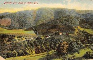 Beautiful Foot Hills in Winter, California 1908 Vintage Postcard