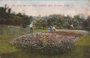 New York Rochester The Pansy Bed and Lilacs In Highland Park 1907