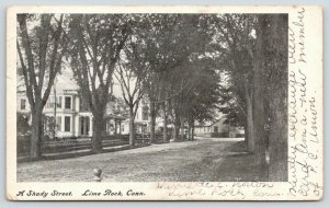 Lime Rock Connecticut~Main Street Shaded by Large Trees~1905 B&W Postcard