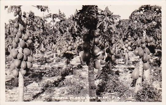 Florida Miami Papaya Plantation Real Photo