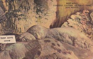 New Mexico Carlsbad Baby Hippo Carlsbad Caverns National Park