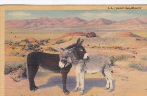 Burros in love   Desert Sweethearts