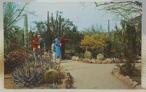 Desert Botanical Garden 1961 Tempe Phoenix Arizona Vintage Postcard
