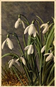 Flowers -  Snowdrop                            (Thor & Gyger #2966)