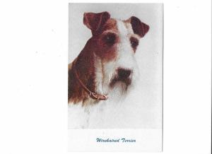 Wirehaired Terrier Dog  #94 Standard Arts Berkley CA