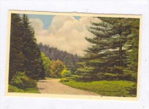 Along Approach Road, Biltmore House & Gardens, Biltmore, North Carolina, 1900...