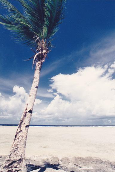 Micronesia Pohnpei Beautiful Beach Scene With Palm