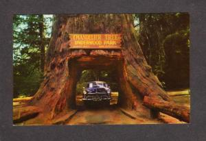 CA Drive Thru Tree Park Redwood Trees Forest Leggett California Chandelier