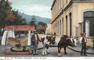 Portugal Madeira Funchal Caro de Bois, Oxen Cattle Carriage Cart
