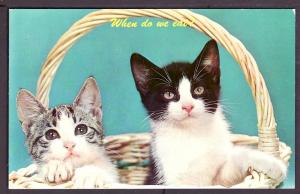 When Do We Eat Kittens in a Basket Post Card PC2397