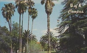 Arizona Tucson University Of Arizona U Of A Campus