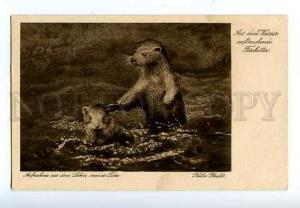 127032 Emerging from the water otter Vintage Kathe Hecht PC