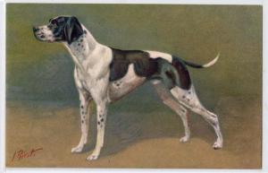 Dog - Pointer by J Rivst
