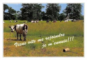 France La Normandie Vaches, Animals Cows