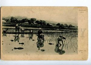 231805 JAPAN rice Plantation Vintage St. Eugenie Red Cross PC