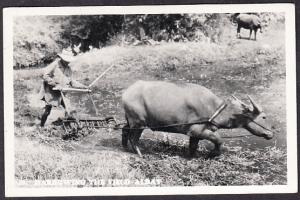 Harrowing the Field, Albay Phillipines RP 1956