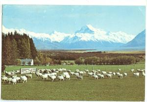 New Zealand, Glentanner Station showing Mt. Cook, Canterbury, 1985 used Postcard