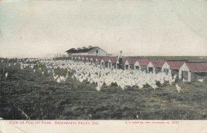 SACRAMENTO , California , 1913 ; View of Poultry Farm