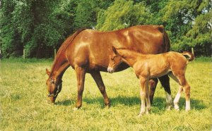 Mare and foal in fiueld Vintage English Bamforth Animal Ser. PC # G388