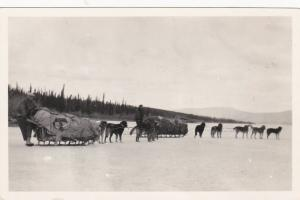 RP, BRITISH COLUMBIA, Canada, 1910-20s; Dog Sled teams on ice