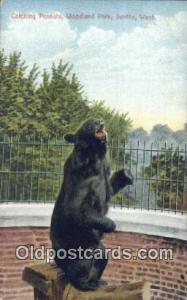 Woodland Park, Seattle, Washington, USA, Bear Postcard Post Card Old Vintage ...