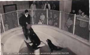 England Brighton Sea Lions The Brighton Aquarium Photo