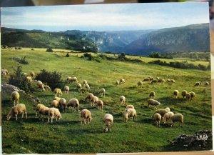 France Paturage sur le Causse - posted 1981